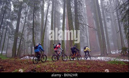 mountain bikers on Bear Creek Trail, Camp Nelson, California - Stock Photo