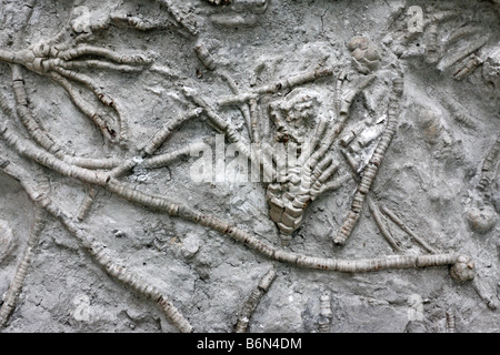 Detail of ancient sea bottom, contour with plant fossils, Palaeontology museum, Moscow, Russia - Stock Photo
