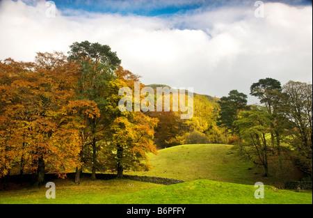 Autumn trees on the slopes around Loughrigg Tarn Lake District National Park Cumbria England UK - Stock Photo