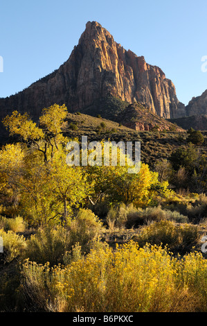 The Watchman formation during an autumn sunset in Zion National Park Utah with cottonwood trees and bush in full - Stock Photo