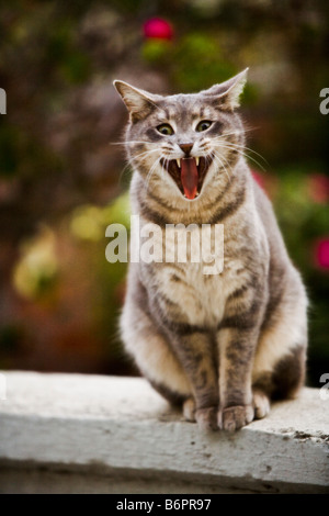 A cat sits on a fence and appears to be ready to fight - Stock Photo