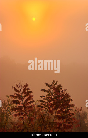 Sunrise with Sumac in the Foreground Foothills Parkway Great Smoky Mountains - Stock Photo