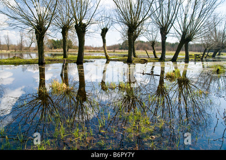 Landscape of willows in Kampinos National Park near Warsaw, Poland - Stock Photo