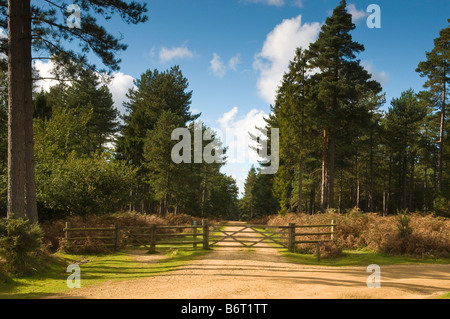 Forest track in the New Forest National Park, Hampshire, England, UK - Stock Photo