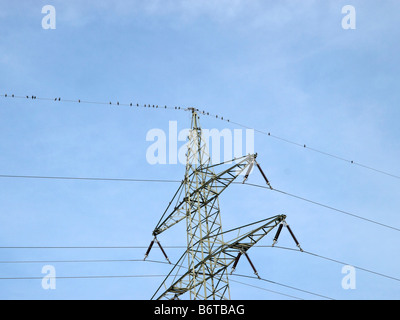 birds sitting in a row on high voltage cable at a pylon - Stock Photo