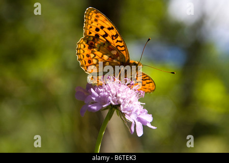 Butterfly put on a leaf, opened wings - Stock Photo