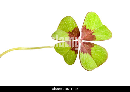 Symbol of good fortune isolated four leaf clover - Stock Photo