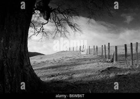 Mature beech tree in evening light Linley hill, Shropshire, England, UK - Stock Photo