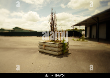 Carpark with tree in planter - Stock Photo
