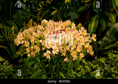 Flowers from Flora exhibition - Stock Photo