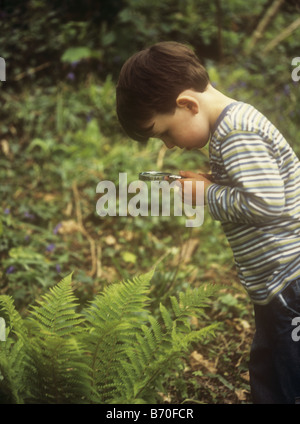Boy looking at fern plant with magnifying glass in a wood - Stock Photo