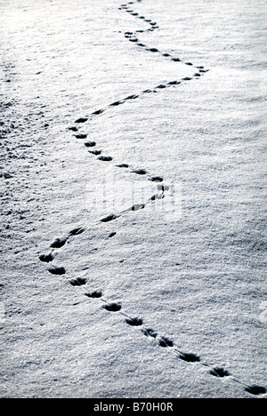 Animal tracks in fresh snow, sud-Touraine, France. - Stock Photo