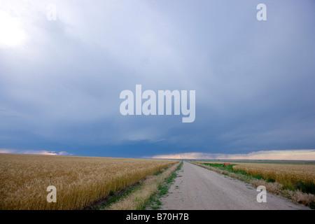 Road and wheat field in Wakeeney Kansas - Stock Photo
