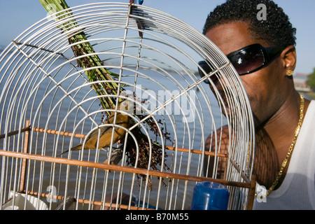 Suriname, Paramaribo. Creole man and singing picolet bird, eating rice-grass. - Stock Photo