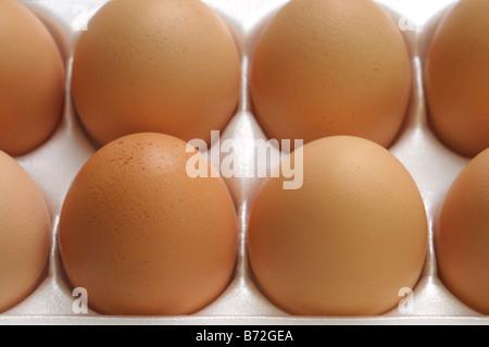 Close up of Brown eggs in carton, Hen Eggs - Stock Photo