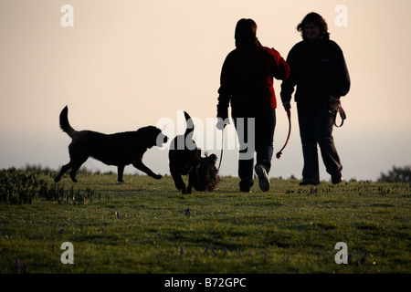 two women out walking thee dogs in morning light county down Northern Ireland UK - Stock Photo