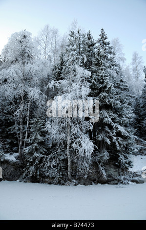 Snow and frost on trees in winter scene at dusk near Oslo Norway - Stock Photo