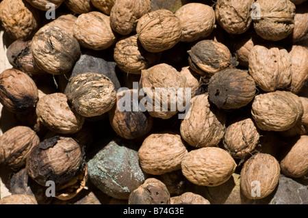 Close up of fresh juglans regia in market Lebanon Middle East - Stock Photo
