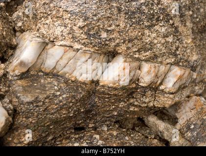 A thick vein of white quartz in a granite boulder. - Stock Photo