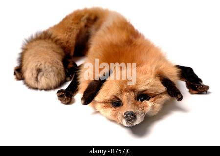 Fox pelt - Stock Photo