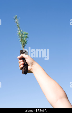 Hand holding up tree seedling, Winnipeg, Manitoba, Canada