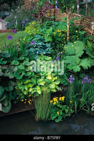 A garden flower border with water plants in a pool - Stock Photo