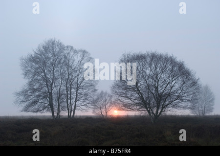 birch at the sunset trees winter moor - Stock Photo