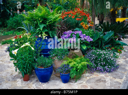 Collection of planted pots in a tropical garden - Stock Photo