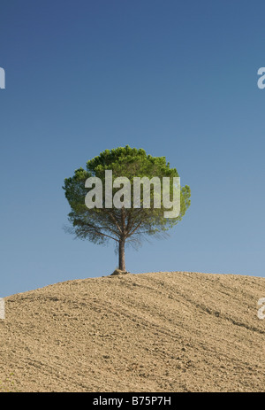 Colourful Image of a single small green tree on top of a pale yellow mound of earth against a blue sky. - Stock Photo