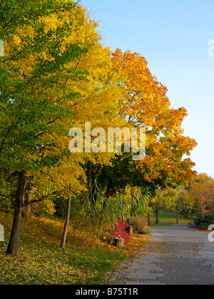 Herbstlandschaft, autumn landscape - Stock Photo