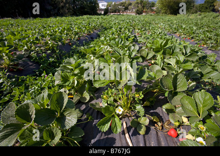 The Center for Urban Agriculture at Fairview Gardens is one of the ...