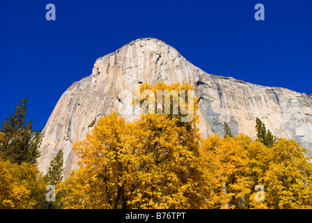 Fall color under El Capitan Yosemite Valley Yosemite National Park California - Stock Photo