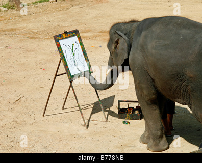 Elephant painting, elephant farm, Mae Sa Valley, jungle, near Chiang Mai, Thailand, Asia - Stock Photo