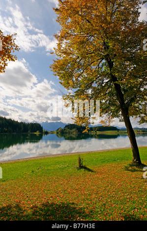 View across the Forggensee lake towards the Thannheim mountains, Bavarian Swabia, Bavaria, Germany Europe - Stock Photo