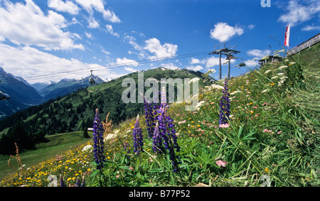 Flower meadow in front of the ski-lift in St. Anton, the Alps, Tirol, Austria, Europe - Stock Photo