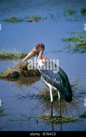 Lake Manyara is a shallow fresh-water lake in Tanzania in the Manyara national park  LAKE MANYARA TANZANIA - Stock Photo