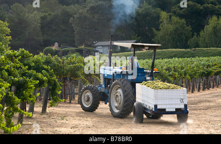 A tractor transports the SAUVIGNON BLANC grape harvest to JOULLIAN VINEYARDS winery CARMEL VALLEY CALIFORNIA - Stock Photo
