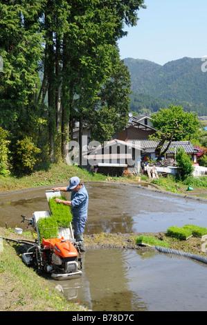 Rice farmer pushing the rice plants into the planting machine, Ohara near Kyoto, Japan, Asia - Stock Photo