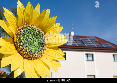Renewable energy, house with solar plant on the roof, sunflower next to it, Hesse, Germany, Europe - Stock Photo