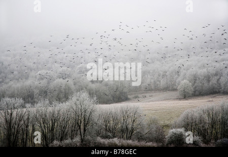Birds in Flight on a Misty, Frosty Winter Morning - Stock Photo