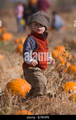 A little boy in a pumpkin patch in Fallon Nevada - Stock Photo