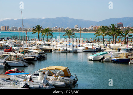 Boats in Club Nautic s'Arenal, marina with palm trees in Arenal, Majorca, Balearic Islands, Mediterranean Sea, Spain, - Stock Photo