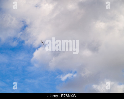 Blue Sky with White Fluffy Clouds in Summer Autumn - Stock Photo