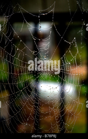 dew covered spiders web - Stock Photo
