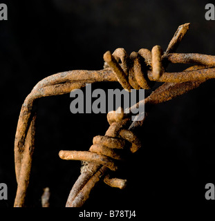 Close up of two sections of twisted, rusty barbed wire - Stock Photo