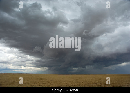 Massive storm cloud forming over farm crop - Stock Photo