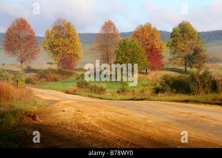 Farm road leading through trees with autumn colors - Stock Photo
