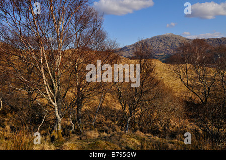 Bare woodlands frame a distant view of rocky Ben Resipol in the Sunart district western Scotland - Stock Photo