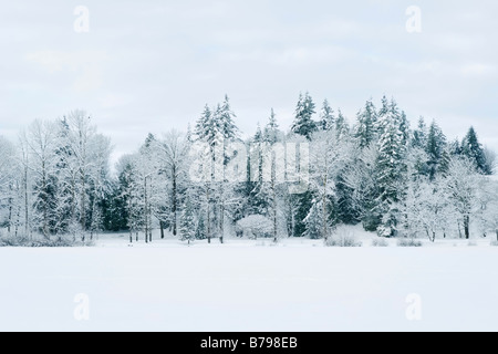 Snow covered trees line Mill Lake in Abbotsford BC Canada - Stock Photo