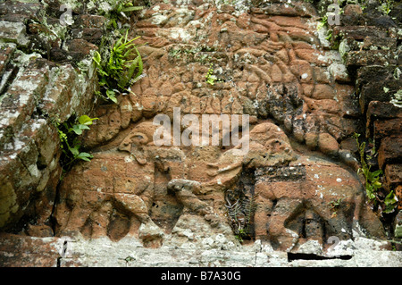 Plants growing over an old relief in brick with two elephants at a Cham Temple, Group B and C, My Son, Vietnam, - Stock Photo